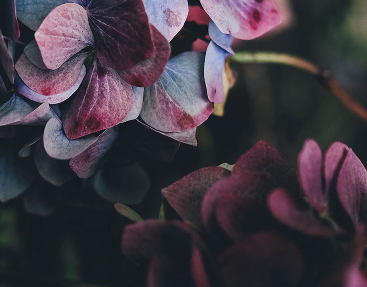 flairpromomodels flower banner2